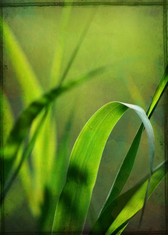 Free Stock Photo of Grass Texture Created by Rachael Towne