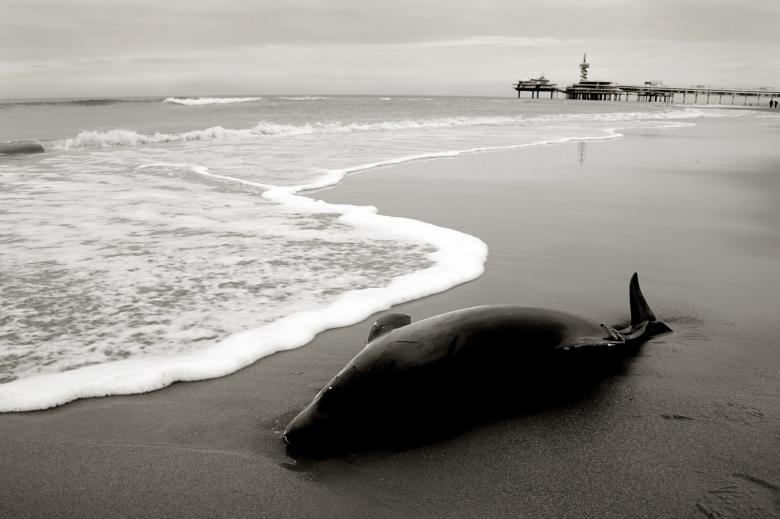 Free Stock Photo of Dolphin washed to shore Created by Merelize