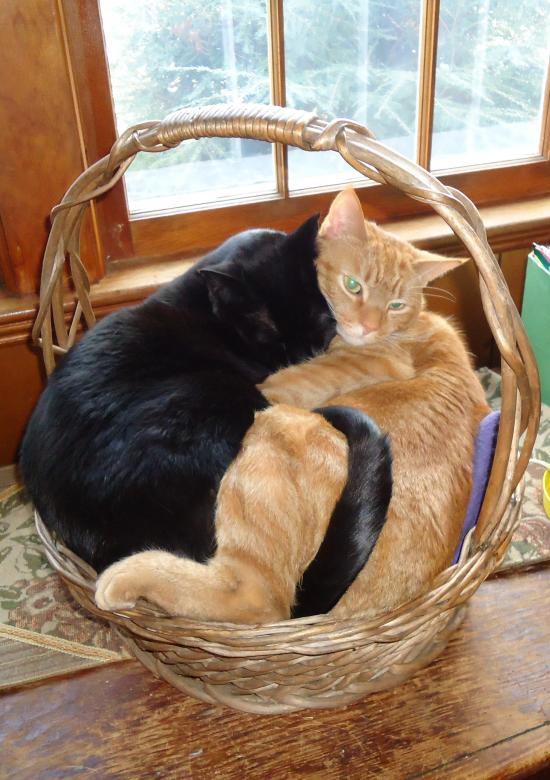 Free Stock Photo of Two Cats in a Basket Created by Katharine Sparrow
