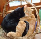 Free Photo - Two Cats in a Basket