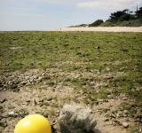 Free Photo - Buoy on beach