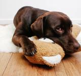 Free Photo - Labrador dog cuddling with teddy bear