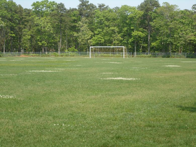 Free Stock Photo of Soccer Field Created by Katharine Sparrow