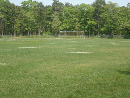 Soccer Field - Free Stock Photo