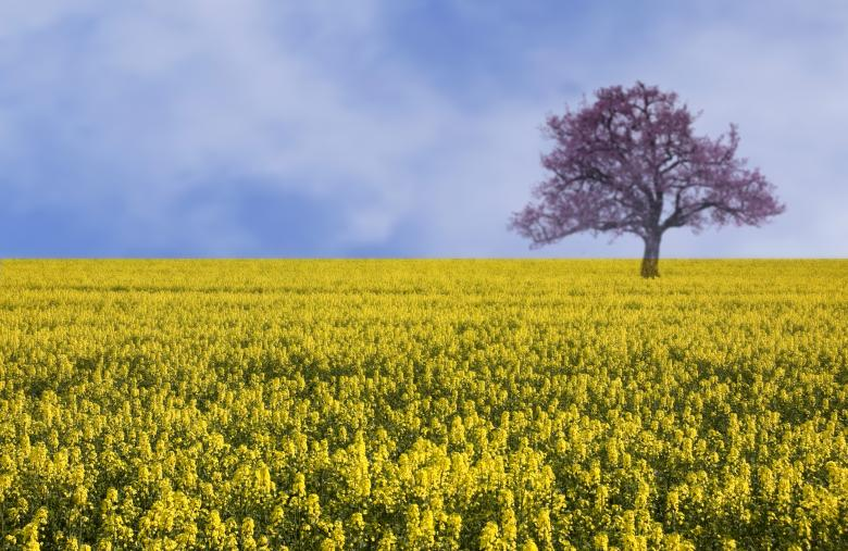 Free Stock Photo of Yellow field landscape Created by Elena Butler