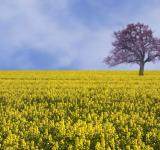 Free Photo - Yellow field landscape