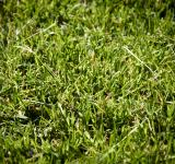 Free Photo - Green grass texture
