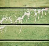 Free Photo - Green wood and paint texture
