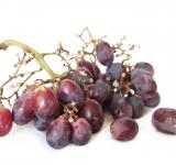 Free Photo - Purple grapes