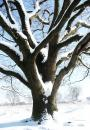 Free Photo - tree with snow in winter