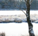 Free Photo - winter lake with snow