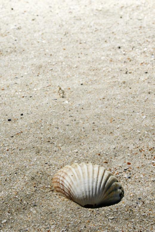 Free Stock Photo of shell on beach Created by Merelize