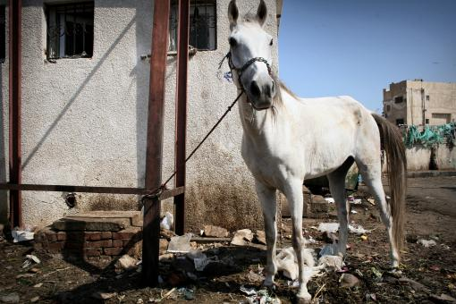 Horse kept by trash - Free Stock Photo