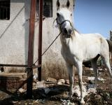 Free Photo - Horse kept by trash