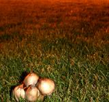 Free Photo - Mushrooms