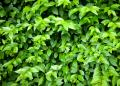 Free Photo - Green leaves texture