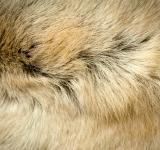 Free Photo - Animal fur texture