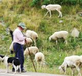 Free Photo - Farmer with sheep and dogs