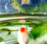 Free Photo - Fish in bowl