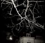 Free Photo - Haunted house at night