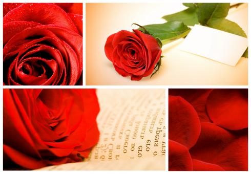 Red Roses Collage - Free Stock Photo