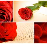 Free Photo - Red Roses Collage