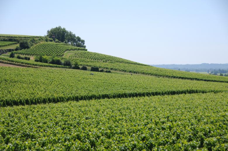 Free Stock Photo of French vineyard Created by mlle
