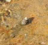 Free Photo - Hermit Crab Shell