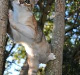 Free Photo - Cat in tree