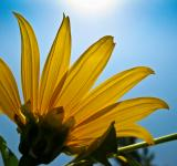 Free Photo - Hello sunshine