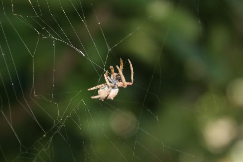 Free Stock Photo of Garden Spider Created by Lesley Huntley