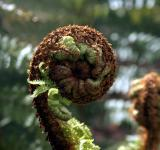 Free Photo - New Zealand Fern