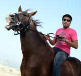 Free Photo - Horsemanship