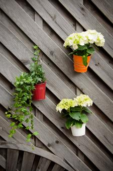 flower pots  - Free Stock Photo