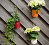 Free Photo - flower pots