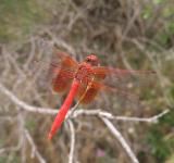 Free Photo - Red insect
