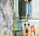 Free Photo - Scruffy dog waiting at the gate