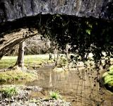 Free Photo - Arch bridge in nature