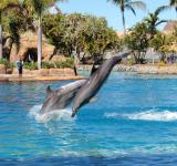 Free Photo - Dolphins