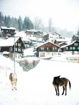 Snowy village and horses - Free Stock Photo