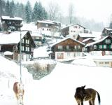 Free Photo - Snowy village and horses
