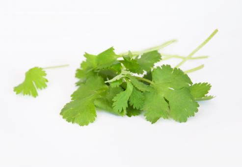 Coriander fresh herbs - Free Stock Photo