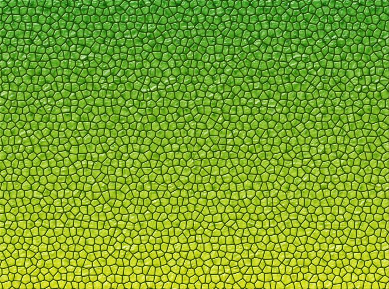 Free Stock Photo of Reptile skin texture Created by Merelize