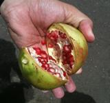 Free Photo - Pomegranate