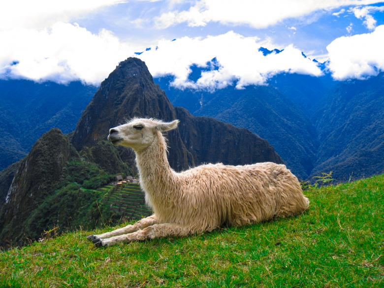 Free Stock Photo of Machu Picchu Llama Created by Nicolas Raymond