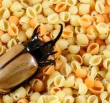 Free Photo - Pasta Beetle