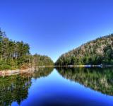 Free Photo - Lac Spruce - HDR