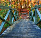 Free Photo - Bridge to Fall - HDR