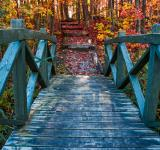 Free Photo - Bridge to Fall