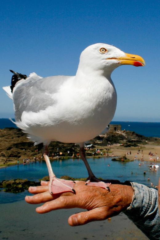 Free Stock Photo of Seagull Created by Merelize